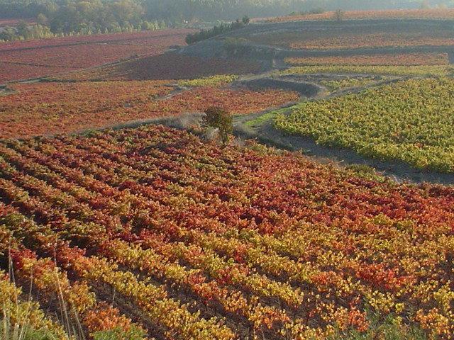 Evaluación del estado nutricional de la variedad Tempranillo en el ámbito de la DOCa Rioja