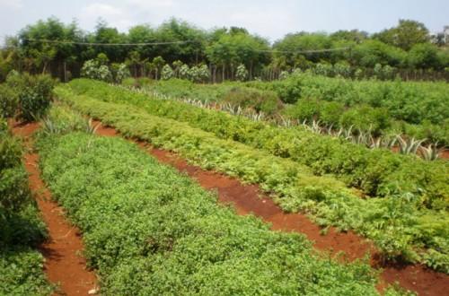Situación actual y perspectivas de futuro de la agricultura ecológica en España