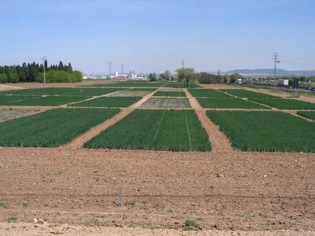 Influencia del sistema de laboreo en los cultivos y la vegetación arvense
