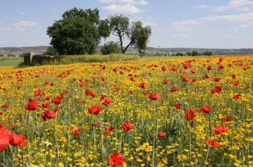 Situación actual del control de malas hierbas: problemática y perspectivas futuras