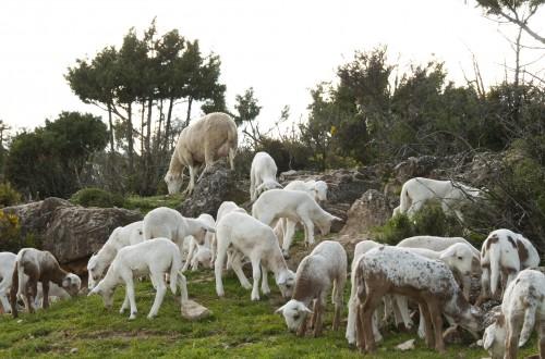 Indicadores productivos del sector ovino/caprino español