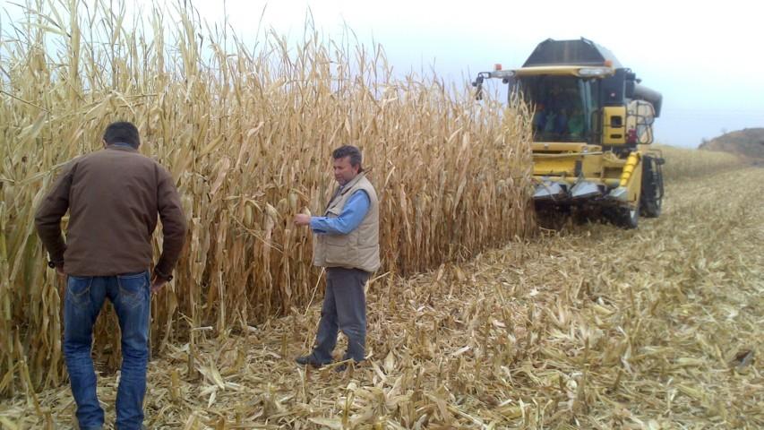 Resultados productivos de un maíz sembrado con la máquina Monosem Twin-Row Sync-Row