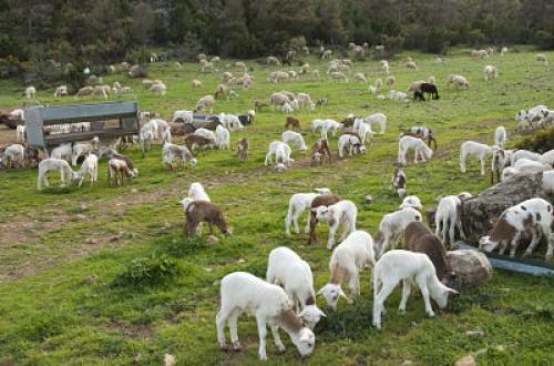 Estudio comparativo de dos sistemas productivos en ovino
