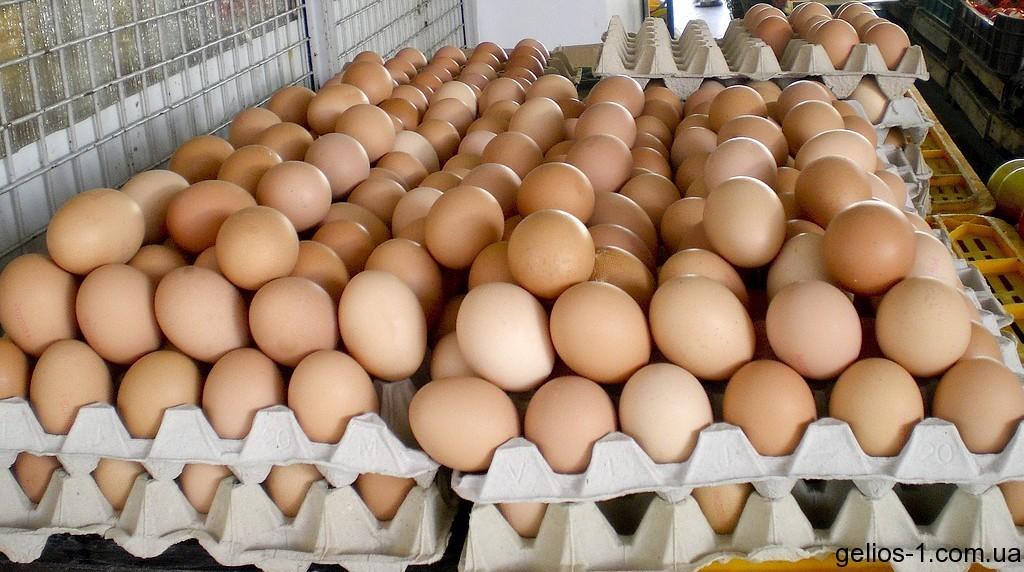 Los productores de huevos piden a la UE mayor protección en el mercado