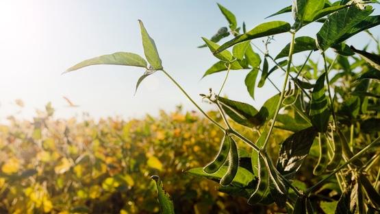 Basf rinde homenaje a la agricultura, la actividad más valiosa para la sociedad y para el planeta