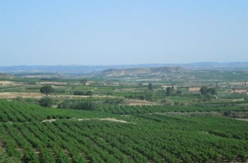 Producción e innovación varietal en el cultivo del melocotón en España