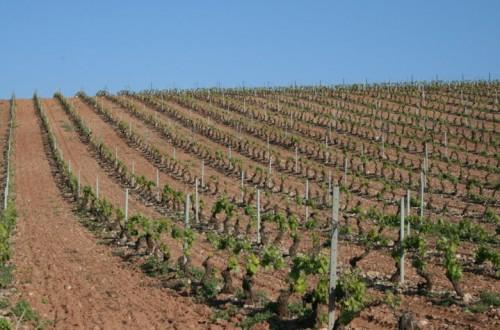 Por una viticultura en equilibrio y rentable