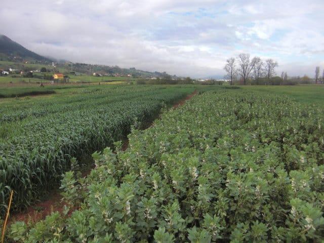Política Agrícola Común 2015-2020 y producción forrajera