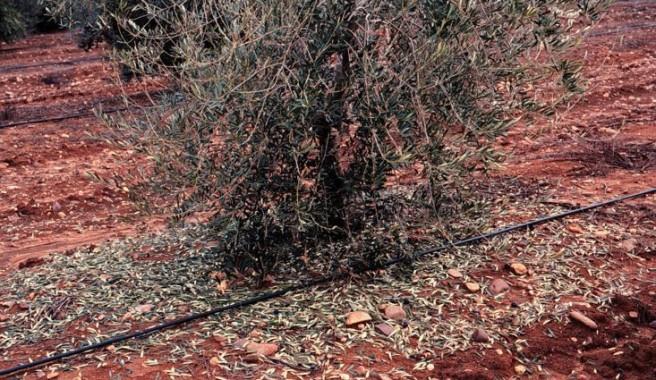 verticilosis (FILEminimizer)