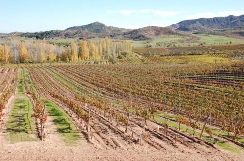 Manejo del riego en el viñedo con cubierta vegetal