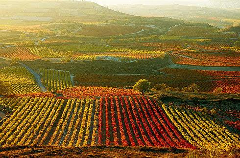 El Gobierno Vasco denuncia la actitud de la DOCa Rioja para con el sector vitivinícola alavés