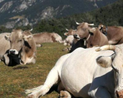 Estudian las prácticas de bioseguridad sobre el riesgo de tuberculosis bovina