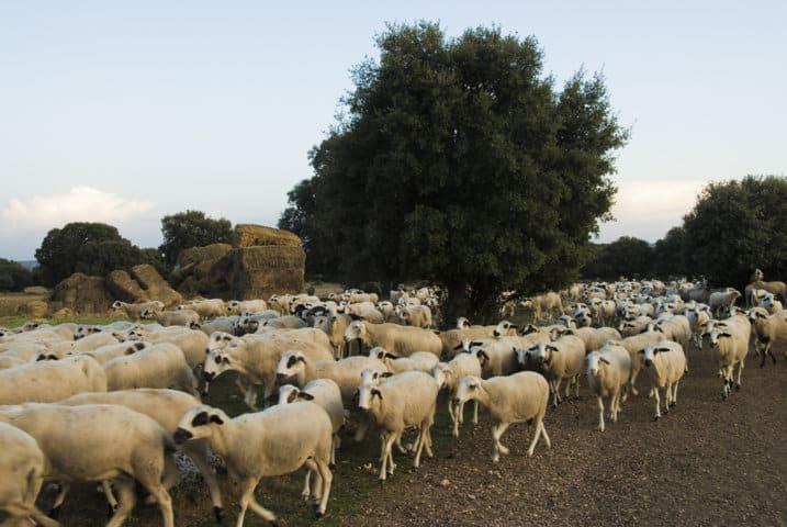 Manifestación mañana en Sevilla en defensa de la ganadería y el monte mediterráneo