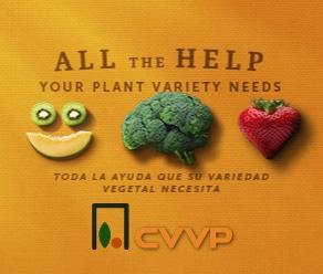CVVP F.L. Febrero 292*248