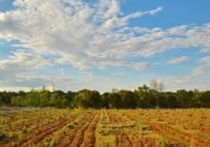 Fuentes del Silencio recupera viñedos abandonados en el Valle del Jamuz