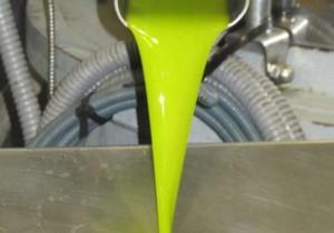 Citoliva enseña a elaborar aceites de alta gama a las cooperativas sin experiencia
