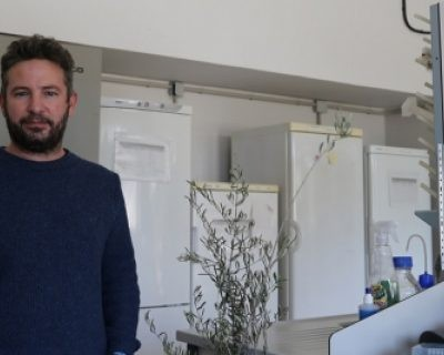 El manejo integrado de enfermedades salva al olivar de la verticilosis