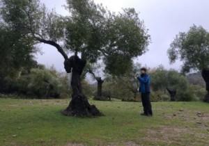Comprueban la efectividad de las hormigas contra las dos principales plagas del olivo