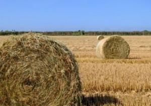 Plantas de biogás alimentadas con el residuo de la paja de los cultivos de arroz