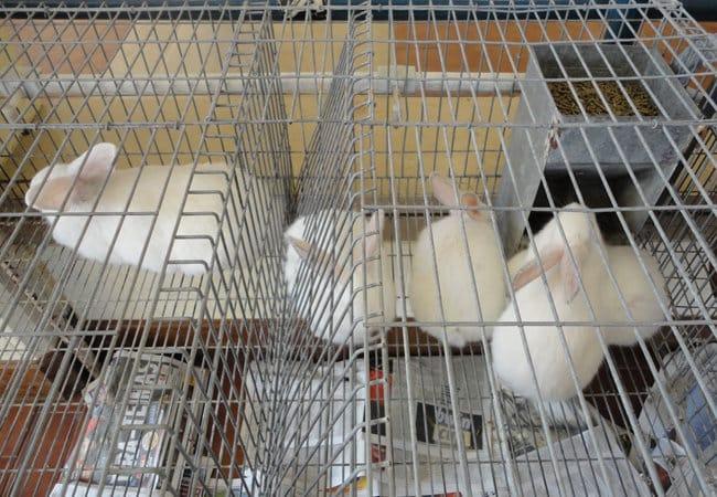 COAG denuncia que mataderos y cadenas de distribución empujan a los productores de conejo a la ruina