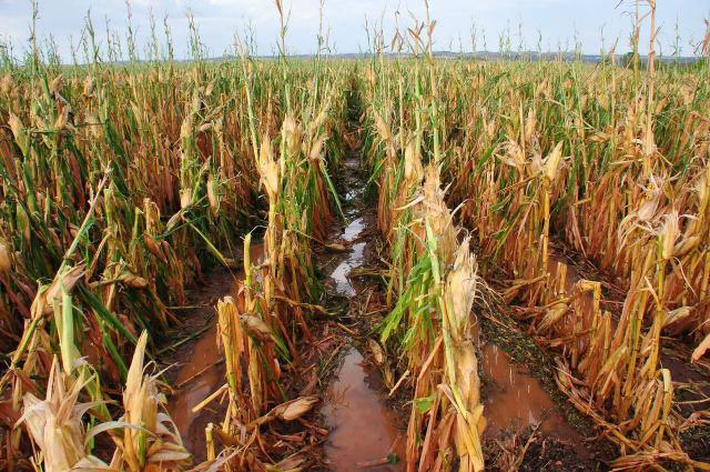Agroseguro abona 48,3 millones de euros por los siniestros ocurridos en la cosecha de cereales