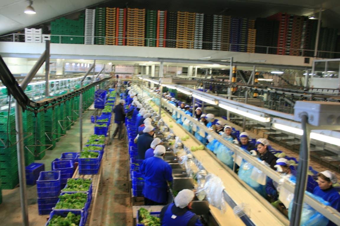 Especial agricultura en la Región de Murcia