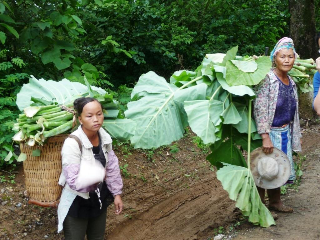 La crisis china actual está influyendo sobre la demanda global de alimentos y commodities. Por Jaime Lamo de Espinosa