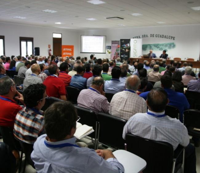 El Plan STAR Olivar analiza las claves para mejorar la rentabilidad de las explotaciones olivareras