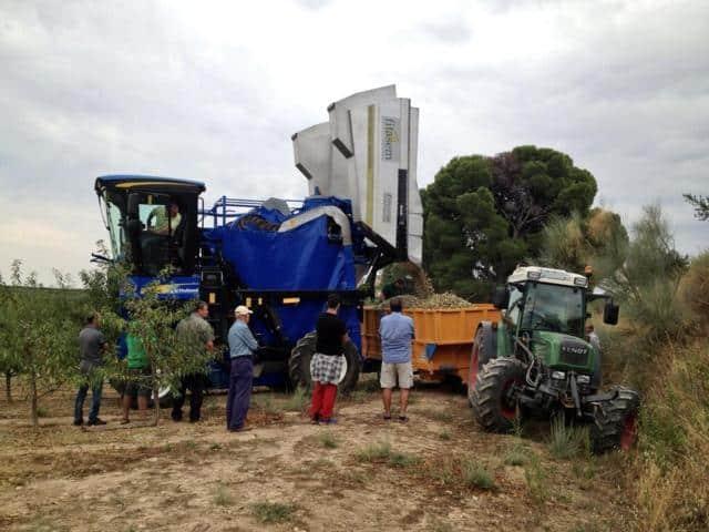 Avances en la recolección mecanizada del cultivo del almendro