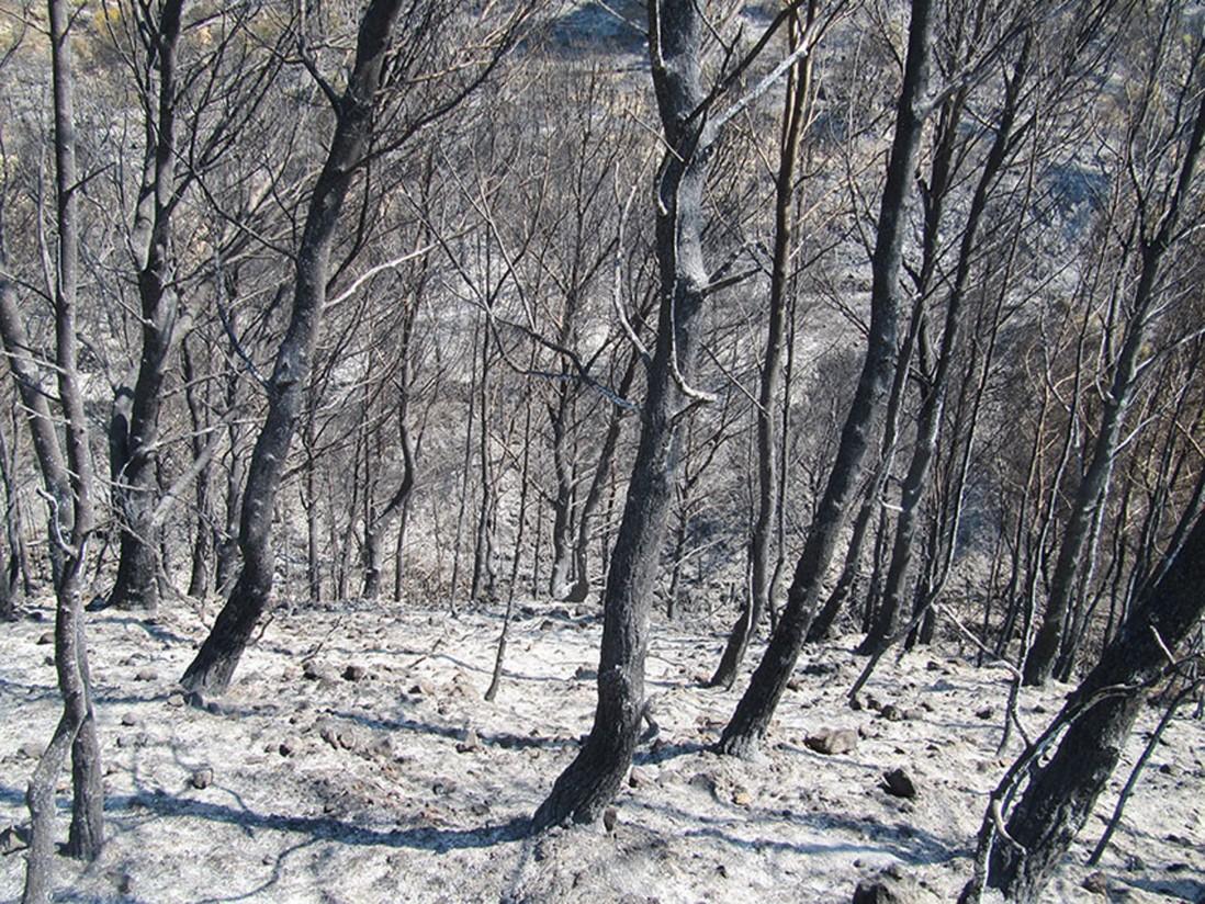 FITAG UGT reclama a las administraciones el refuerzo de la prevención de incendios