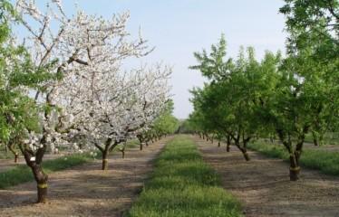 frutos secos (FILEminimizer)