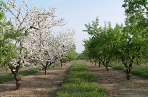 Los frutos secos, un sector agrícola estratégico español por el valor de su producción