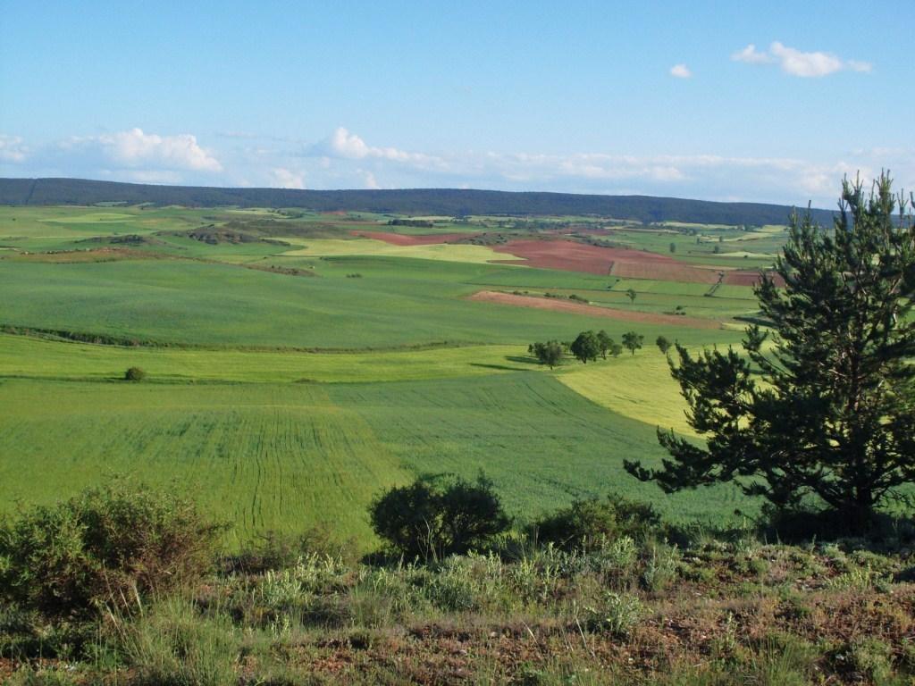 Los pagos del FEAGA al sector agrario español se elevaron a 5.642,2 M€ en el ejercicio 2015