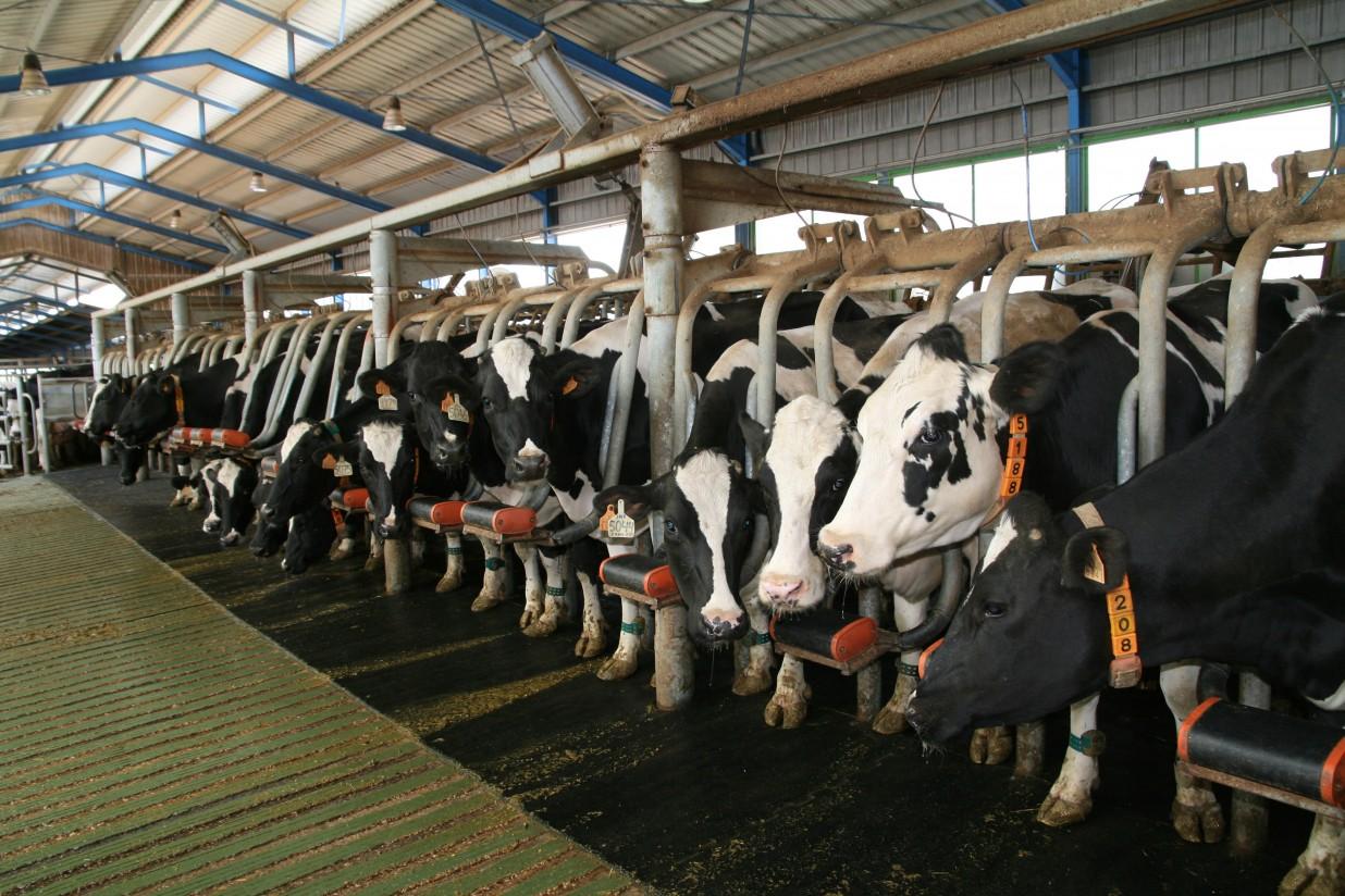 Cooperativas Agro-alimentarias de Andalucía pide que las ayudas excepcionales lleguen a todos los ganaderos de leche