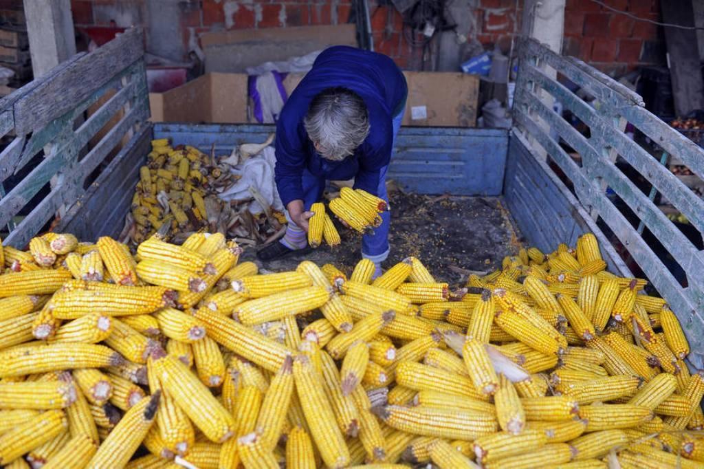Solo el azúcar se salva de la nueva caída de los precios mundiales de los alimentos en noviembre