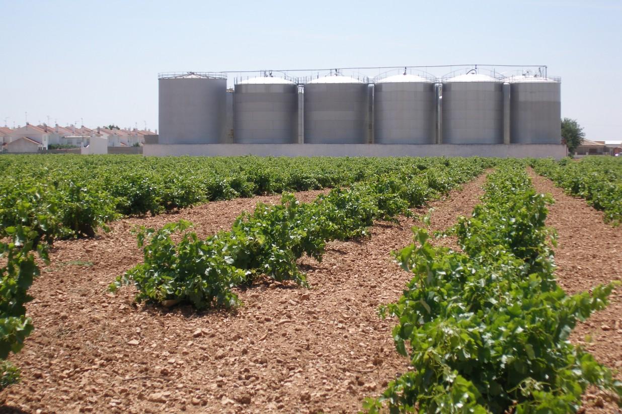 Ciudadanos: por un sistema agroalimentario competitivo y sostenible