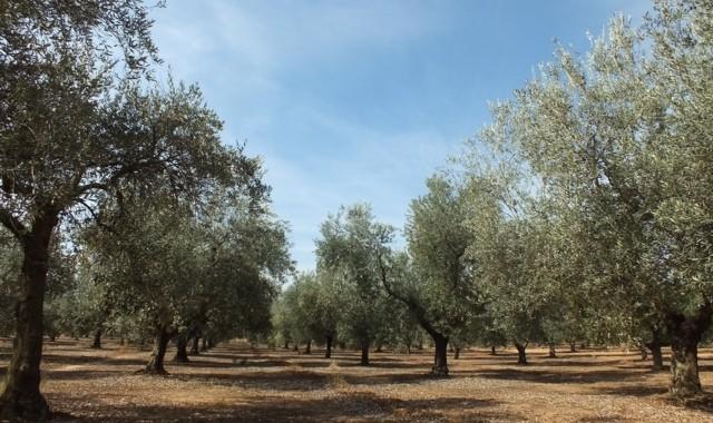 olivar_biodiversidad (FILEminimizer)