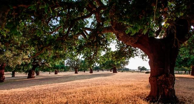 Resultados del proyecto «enArbolar: Grandes árboles para la Vida»