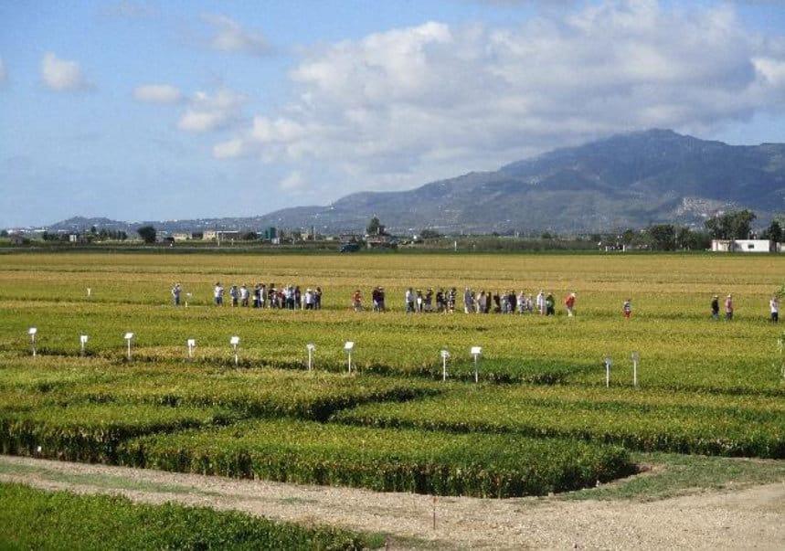 El IRTA organiza su XII Jornada técnica del arroz en Deltebre
