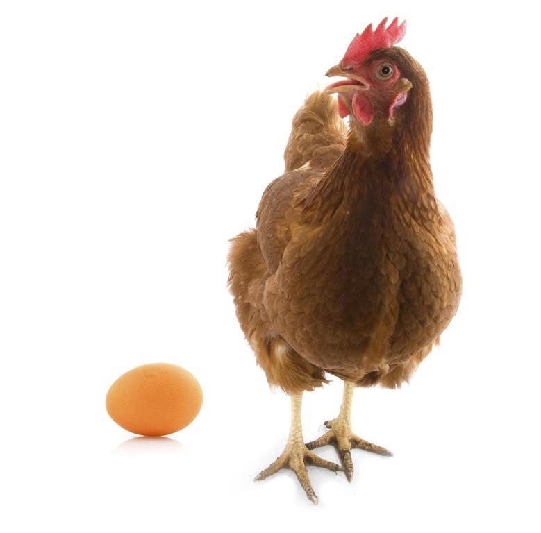"""Nanta presenta un innovador producto """"Ponedoras Lame"""" para optimizar el arranque de puesta de las gallinas ponedoras"""