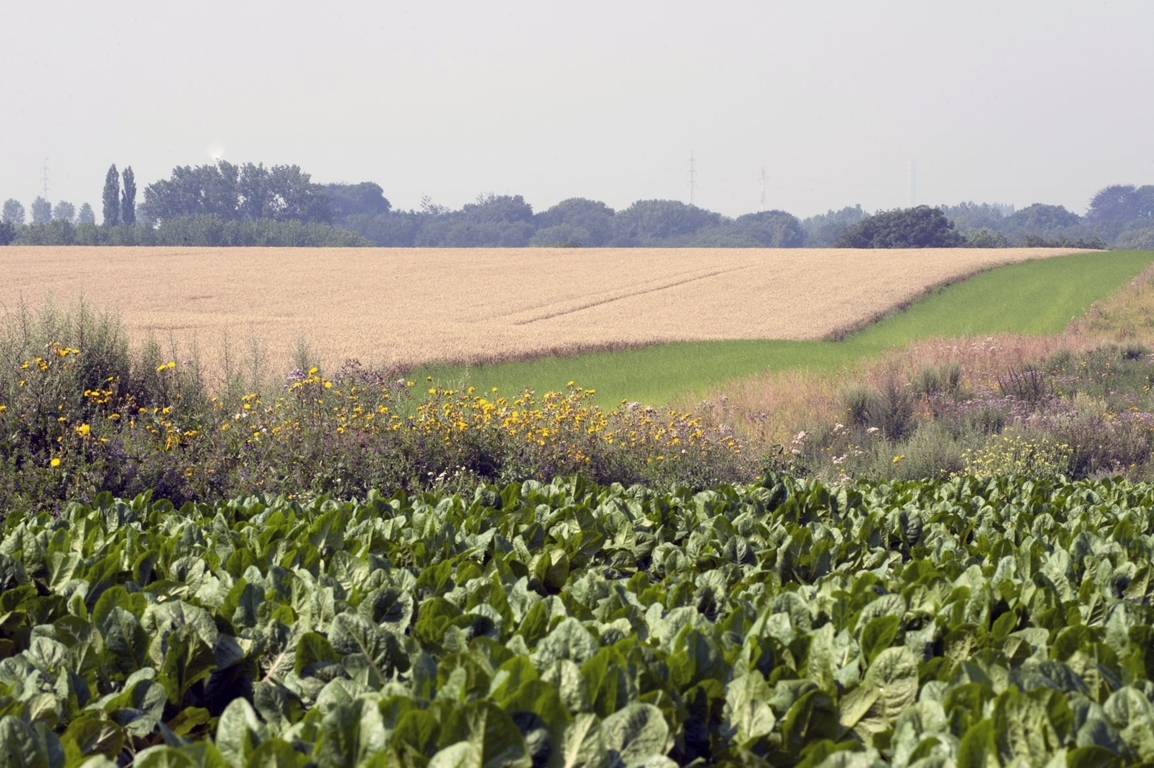 Los agricultores pueden acceder ya a la información sobre sus Derechos de Pago Básico definitivos de la PAC