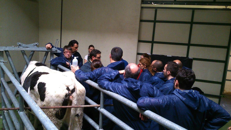 Zoetis colabora en el curso de ecografía músculo-esquelética, visceral y reproductiva en bovinos de Humeco