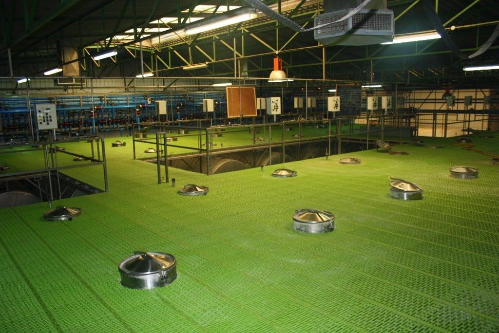 El Grupo Dcoop lidera la producción mundial de aceituna de mesa tras integrar Acyco