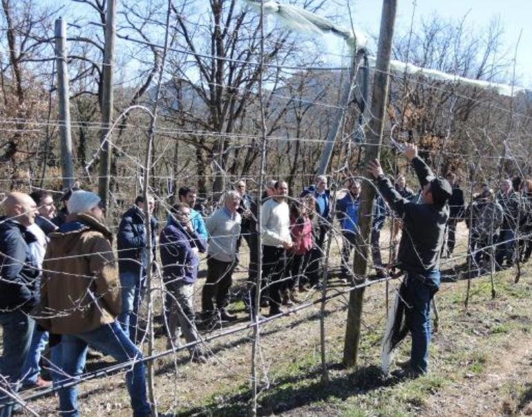 El IRTA organiza la V jornada de poda en manzana de montaña