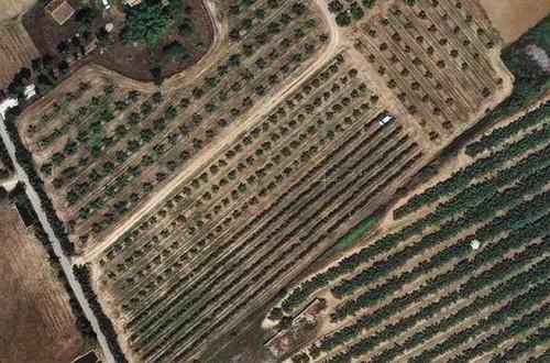 Eficiencia del riego deficitario controlado en olivar según distintos sistemas de plantación