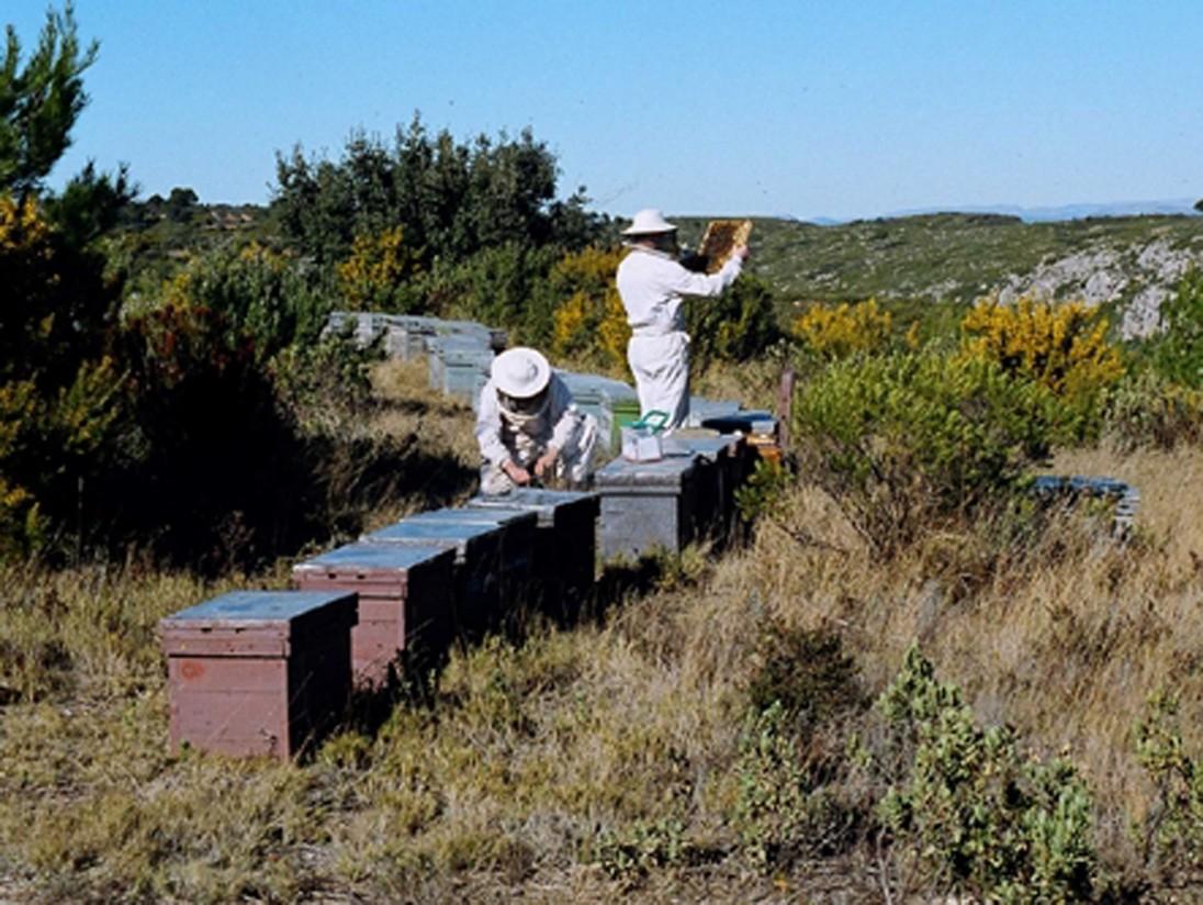 El sector apícola considera perjudicial el acuerdo UE-Mercosur