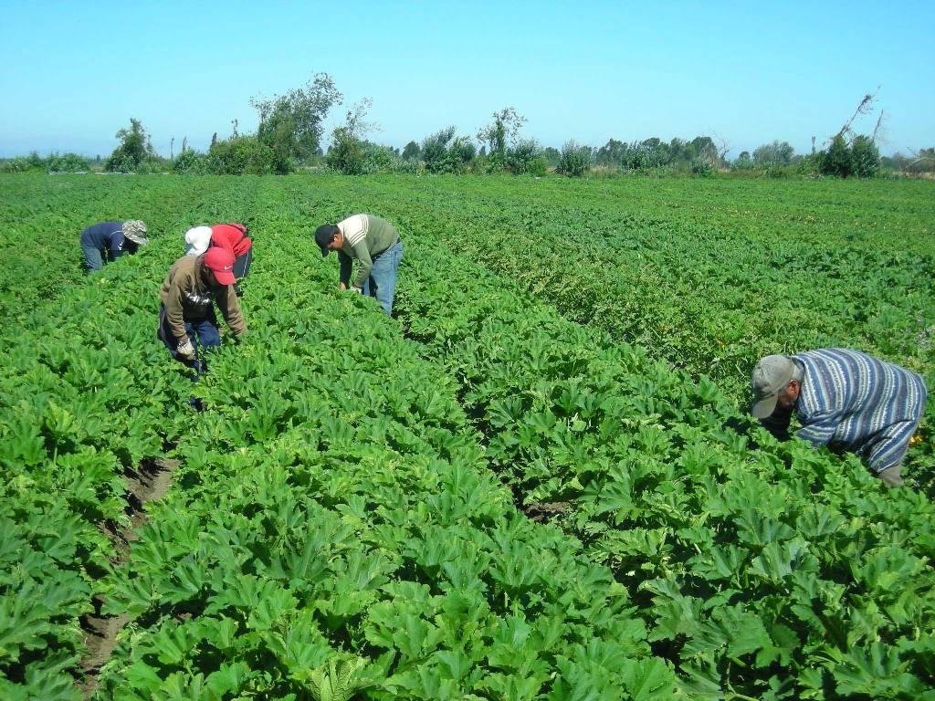 La ocupación en la rama de Agricultura es del 75% de los activos, con 777.400 trabajadores