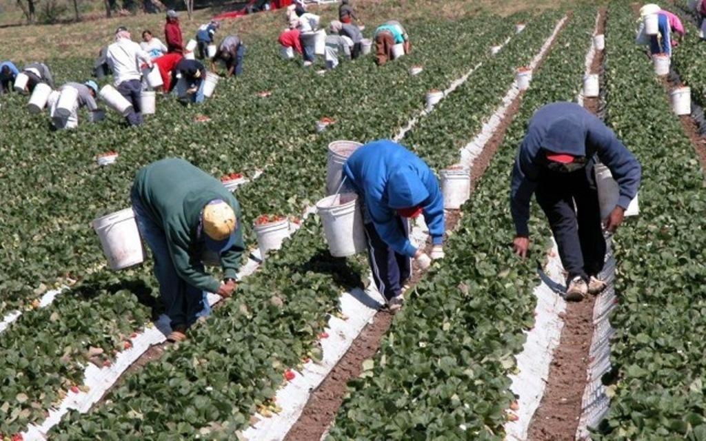 Baja un 0,6% y en 1.262 personas el paro registrado en Agricultura en el mes de marzo