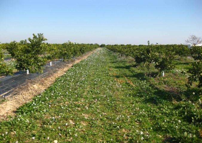 Diversidad y servicios ecosistémicos de los insectos depredadores en cítricos
