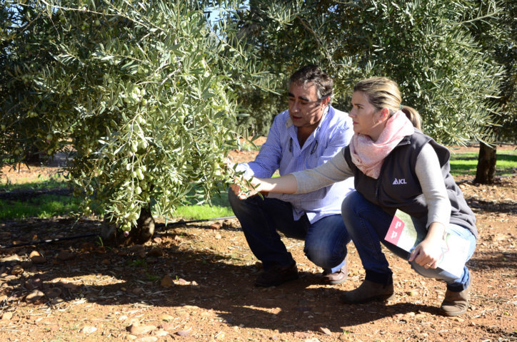 Agroleaf Power, tecnología foliar para potenciar la productividad del olivar